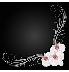 Delicate corner frame with orchid flowers vector