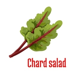Chard salad vegetable plant icon vector