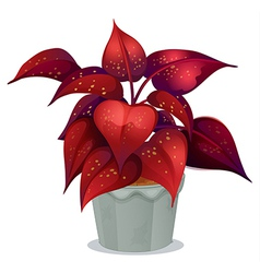 A plant with red leaves vector