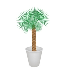A palm tree in flower pot vector