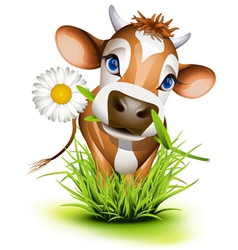 Jersey cow in green grass vector image vector image