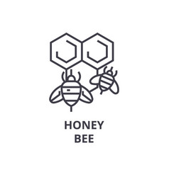 Honey bee line icon outline sign linear symbol vector