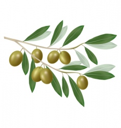olive green vector image vector image