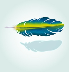 Realistic feather vector