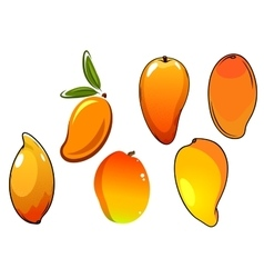 Orange fresh tropical mango fruits vector