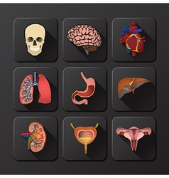 Internal organs medical and health icon set vector