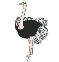 Color of an ostrich vector image vector image