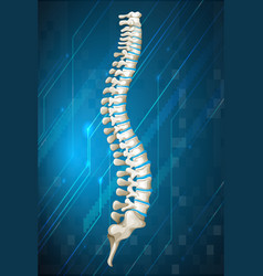 Human spine diagram on blue vector image