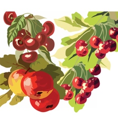 Apple and Cherry fruits Watercolor vector image