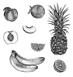 Sketch of banana pineapple peach orange hand drawn vector