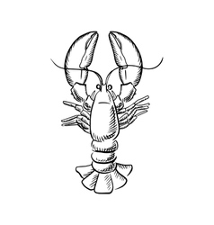 Big atlantic lobster with raised claws vector