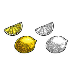 lemon slice and whole black and color vector image vector image