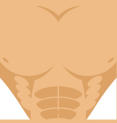 Male torso athletic man chest abdomen strong vector