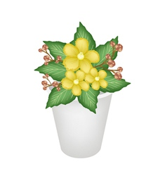 Yellow Simpor Flowers in A Flower Pot vector image vector image