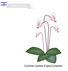 Cyclamen cyprium the national flower of israel vector