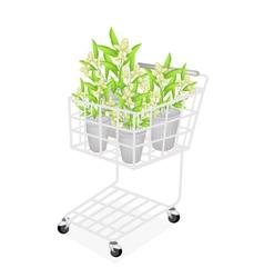 Beautiful ylang ylang flowers in a shopping cart vector