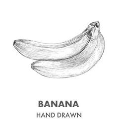 Sketch of banana hand drawn fruit collection vector
