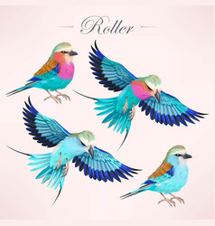 European and lilac-breasted rollers vector