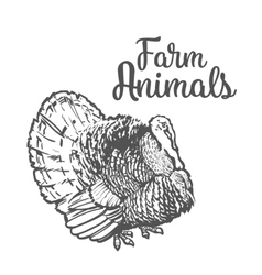 Isolated sketc farm turkey on a white background vector