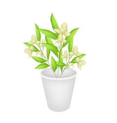 Beautiful ylang ylang flowers in a flower pot vector