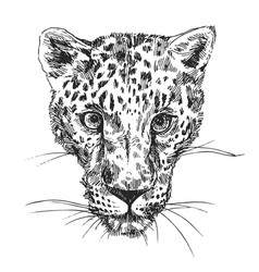 Hand-drawn leopard vector