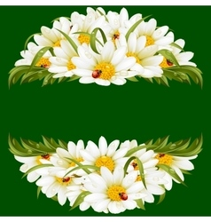 chamomile and ladybugs circle frame vector image vector image
