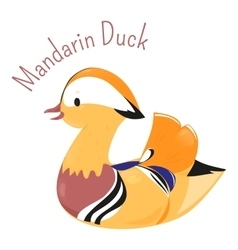Mandarin duck isolated on white vector image vector image