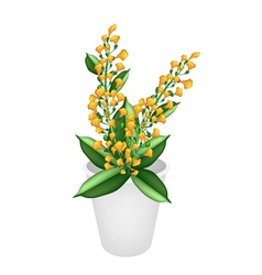 Beautiful Yellow Padauk Flower in A Flower Pot vector image vector image