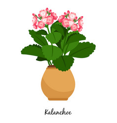 kalanchoe plant in pot vector image vector image