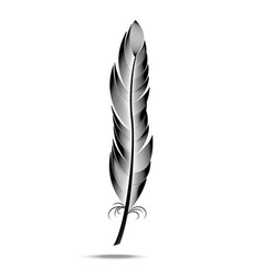 black and white contour feather vector image