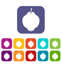 Quince fruit icons set vector