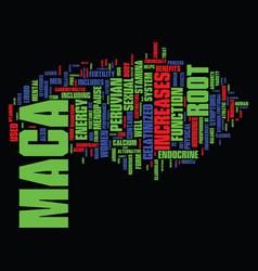 the magical benefits of peruvian maca text vector image vector image