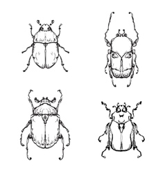 Hand drawn insect vector