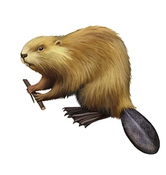 Beaver holding a tree branch vector