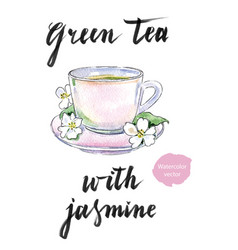 cup of green tea with jasmine flowers vector image vector image