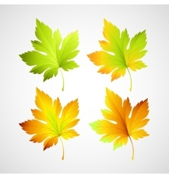Set fall leaves for your design vector image
