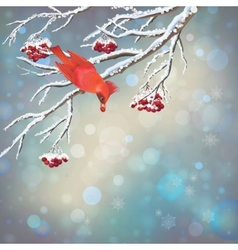 Christmas snowy rowan berries bird card vector