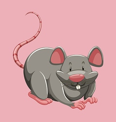Gray rat on pink vector image