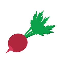 Radish flat icon vector image vector image
