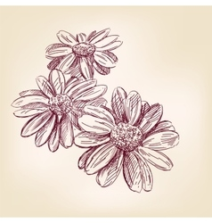 Daisy hand drawn llustration realistic vector