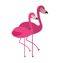 two pink flamingo bird exotic image vector image