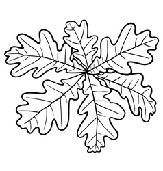 Oak leaves vector