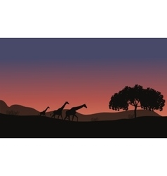 Sunset at Safari and Giraffes Family vector image