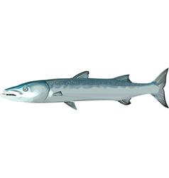Barracuda1 vector