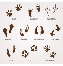 Wildlife tracks vector