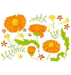 Floral set vector