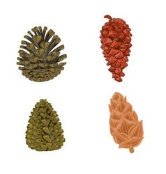 Four pine cones larch cones vector
