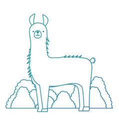 Peruvian llama in jungle vector