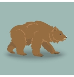 Kodiak angry bear vector image