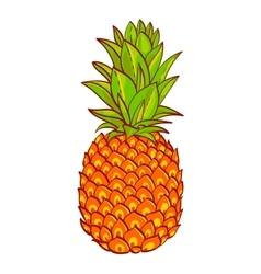 Pineapple hand drawn  print on t-shirt vector